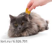 Защита кошки от клещей и блох. Стоковое фото, фотограф Okssi / Фотобанк Лори