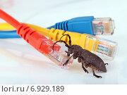 Купить «Страшный жук карабкается на патч-корд, концепции сетевого вируса», фото № 6929189, снято 6 ноября 2012 г. (c) Игорь Долгов / Фотобанк Лори