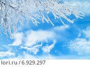 Купить «Ветка в инее на фоне неба с облаками», фото № 6929297, снято 18 января 2015 г. (c) Икан Леонид / Фотобанк Лори