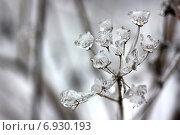 Купить «Последствия ледяного дождя», фото № 6930193, снято 30 декабря 2010 г. (c) Tatiana Tetereva / Фотобанк Лори