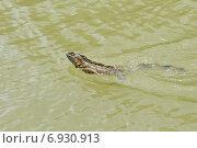 Игуана переплывает реку (2014 год). Стоковое фото, фотограф Ерошкина Ольга / Фотобанк Лори