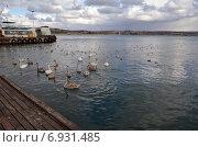 Птицы возле Графской пристани. Стоковое фото, фотограф Ивашков Александр / Фотобанк Лори
