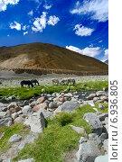 Купить «Горный пейзаж с речкой и лошадьми на пастбище. Гималаи», фото № 6936805, снято 8 сентября 2011 г. (c) Татьяна Белова / Фотобанк Лори