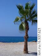Одинокая пальма на берегу моря. Турция (2014 год). Стоковое фото, фотограф Александра Иванова / Фотобанк Лори