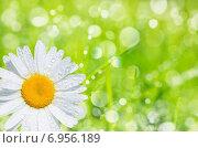 Купить «Ромашка в каплях росы на фоне травы», фото № 6956189, снято 5 июля 2014 г. (c) Икан Леонид / Фотобанк Лори