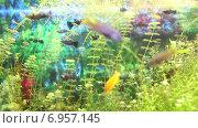 Небольшие рыбки в аквариуме, видеоролик № 6957145, снято 24 августа 2017 г. (c) Евгений Ткачёв / Фотобанк Лори