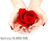 Девушка в руках держит бутон красной розы. Стоковое фото, фотограф Альховик Людмила / Фотобанк Лори