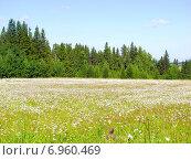 Купить «Зеленая лужайка с весенними цветами на опушке леса», фото № 6960469, снято 17 июля 2005 г. (c) Евгений Ткачёв / Фотобанк Лори