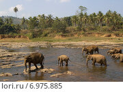 Купание слонов (2014 год). Стоковое фото, фотограф Олег Левин / Фотобанк Лори