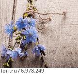Купить «blue chicory flowers on wooden background», фото № 6978249, снято 28 июня 2014 г. (c) Майя Крученкова / Фотобанк Лори