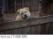 Собака за решёткой. Стоковое фото, фотограф Artem Kotelnikov / Фотобанк Лори