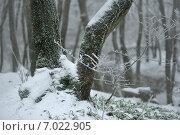 Купить «Замороженный лес», фото № 7022905, снято 13 февраля 2015 г. (c) александр жарников / Фотобанк Лори