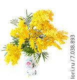 Акация серебристая, или Акация подбелённая (Acacia dealbata) в вазе. Стоковое фото, фотограф Алёшина Оксана / Фотобанк Лори