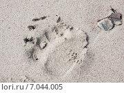След медведя на песке. Стоковое фото, фотограф Наталия Шевченко / Фотобанк Лори