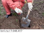 Купить «gardener resetting sprout in soil», фото № 7048417, снято 2 мая 2012 г. (c) Яков Филимонов / Фотобанк Лори