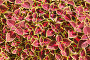 Цветочно-растительный фон, эксклюзивное фото № 7065573, снято 6 октября 2013 г. (c) Юрий Морозов / Фотобанк Лори