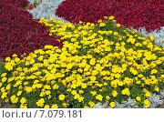 Купить «Цветочная клумба из однолетников», эксклюзивное фото № 7079181, снято 8 сентября 2014 г. (c) Елена Коромыслова / Фотобанк Лори