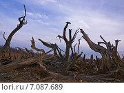Корневища  деревьев. Промзона. Экология. Стоковое фото, фотограф М. Гимадиев / Фотобанк Лори