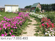 Купить «Дорога на дачном участке», фото № 7093493, снято 16 июля 2011 г. (c) DementevaJulia / Фотобанк Лори