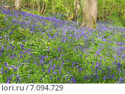 Купить «Цветы в лесу весной», фото № 7094729, снято 17 апреля 2014 г. (c) Любовь Михайлова / Фотобанк Лори