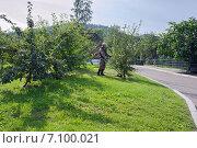 Купить «Работник косит газон в парке», фото № 7100021, снято 28 августа 2013 г. (c) Светлана Попова / Фотобанк Лори