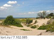 Купить «Балтийское побережье», эксклюзивное фото № 7102085, снято 17 июля 2011 г. (c) Svet / Фотобанк Лори