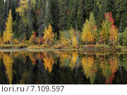 Осень в тайге. Стоковое фото, фотограф Руслан Шувалов / Фотобанк Лори