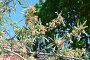Цветет декоративная груша, фото № 7121285, снято 26 апреля 2014 г. (c) Галина  Горбунова / Фотобанк Лори