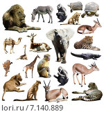 Купить «lions, elephant and other African animals», фото № 7140889, снято 14 ноября 2018 г. (c) Яков Филимонов / Фотобанк Лори