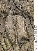 Купить «Фактура коры грецкого ореха», эксклюзивное фото № 7148997, снято 19 марта 2015 г. (c) Ната Антонова / Фотобанк Лори