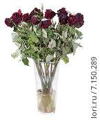 Стеклянная ваза с высохшим букетом роз. Стоковое фото, фотограф Игорь Долгов / Фотобанк Лори