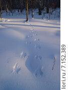 Следы на снегу. Стоковое фото, фотограф Alexander Zholobov / Фотобанк Лори