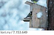 Купить «Синицы на деревянной кормушке в зимнее время года», видеоролик № 7153649, снято 31 января 2015 г. (c) Кекяляйнен Андрей / Фотобанк Лори