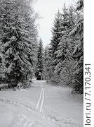 После снегопада в лесу. Стоковое фото, фотограф Анфимов Леонид / Фотобанк Лори