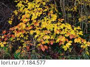 Купить «Осенняя красивая ветка», фото № 7184577, снято 18 ноября 2014 г. (c) Татьяна Кахилл / Фотобанк Лори