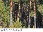 Купить «Бор», эксклюзивное фото № 7203633, снято 12 апреля 2014 г. (c) Анатолий Матвейчук / Фотобанк Лори