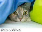 Кошка притаилась. Стоковое фото, фотограф Сотникова Кристина / Фотобанк Лори