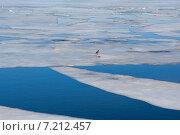 Лед тронулся. Стоковое фото, фотограф Андрей Колабухин / Фотобанк Лори