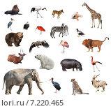 Купить «Комплект из 22 фотографий диких животных, изолированно на белом фоне», фото № 7220465, снято 24 апреля 2010 г. (c) Наталья Волкова / Фотобанк Лори