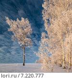 Декабрьский прекрасный пейзаж с заснеженными деревьями. Стоковое фото, фотограф Фёдор Ветров / Фотобанк Лори