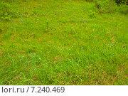 Луговая трава с цветами. Стоковое фото, фотограф Ермолаева Дина / Фотобанк Лори