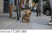 Маленькая собачка на улице. Стоковое фото, фотограф Ольга Акшонина / Фотобанк Лори
