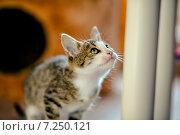 Котёнок смотрит вверх. Стоковое фото, фотограф Савчук Алексей / Фотобанк Лори