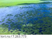 Купить «Поверхность озера, зарастающая травой, вид сверху», фото № 7263773, снято 8 июля 2013 г. (c) Владимир Мельников / Фотобанк Лори