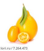 Купить «Ташкентский лимон и кумкват», фото № 7264473, снято 28 марта 2015 г. (c) Ален Лагута / Фотобанк Лори