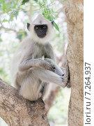 Обезьяна сидит на дереве и смотрит, фото № 7264937, снято 3 ноября 2009 г. (c) Эдуард Паравян / Фотобанк Лори