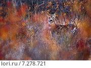 Купить «Косуля», фото № 7278721, снято 13 ноября 2014 г. (c) Рамиль Юсупов / Фотобанк Лори