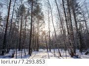 Купить «Солнечные лучи пробиваются сквозь деревья в зимнем лесу», фото № 7293853, снято 8 февраля 2015 г. (c) Евгений Ткачёв / Фотобанк Лори