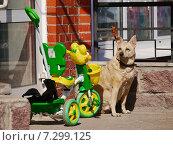 Собака охраняет детскую коляску и ждет хозяина у магазина (2015 год). Редакционное фото, фотограф Александр Боровиков / Фотобанк Лори