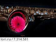 Купить «Саксофон и розовая гербера», фото № 7314581, снято 19 апреля 2015 г. (c) Наталия Ромашова / Фотобанк Лори